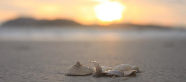 The oft-founded shells at the beach at Langkawi